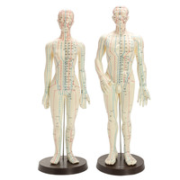Human Body Acupuncture Model Male Female Moxibustion Meridians Acupoint Points Model With Base Medical Education Appliances