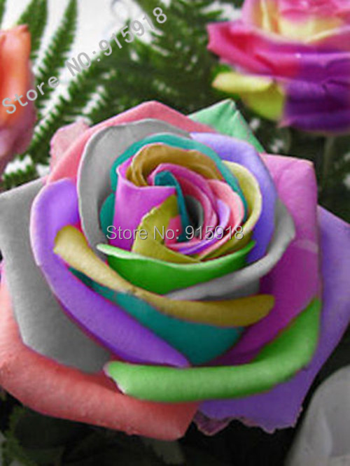 Buy flower seeds bonsai 50 pcs semillas for Growing rainbow roses from seeds