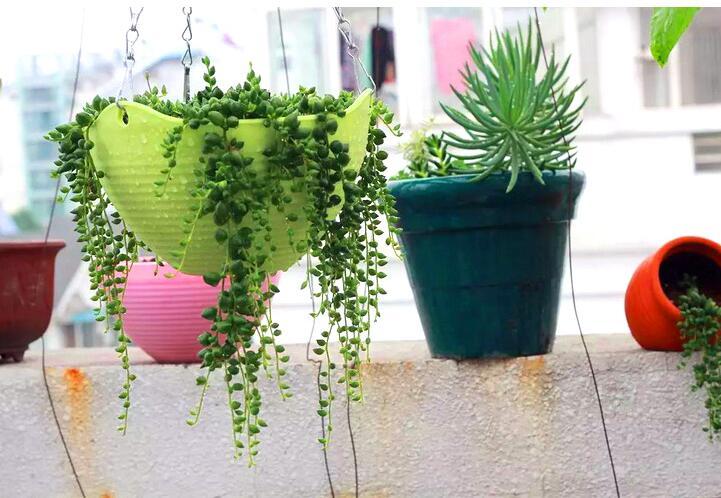 envo gratis unidslote barato maceta jardinera resina pp engrosada reina scindapsus