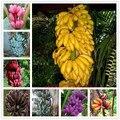 200 unids raras semillas de plátano, bonsai semillas frutas, 11 colores a elegir, Orgánica de La Herencia semillas, plantas para jardín de su casa