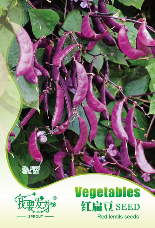 The seeds of 8PC rees lentils, beautiful purple pods, climbing plants, vegetables delicious and + gift