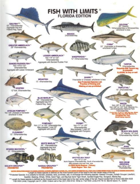 Online Shop The Food Chain Marine Organism Illustration Vintage