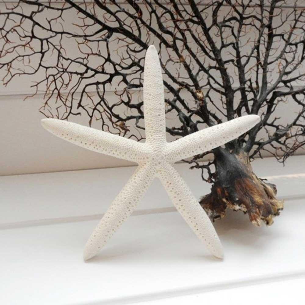 Fashion 10 Pcs White Seafish Pencil Finger Star Sea Shell Beach