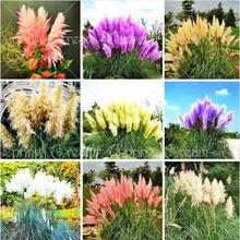 400Pcs Beautiful Pampas Flowers Plant Rare Purple Grass Garden Flower Home & Planting