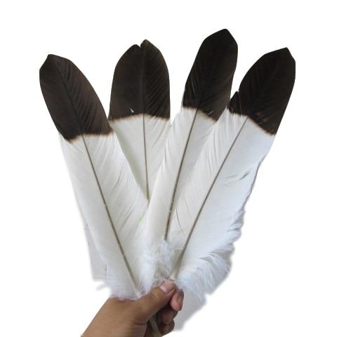 5 plumas de cola de águila