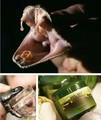 Корейский мощный змеиный яд антиоксидант отбеливания Anti - Aging акне крем для лица по уходу за кожей