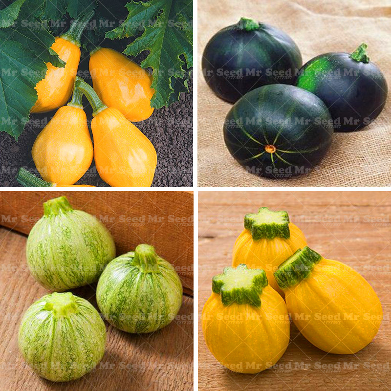 20pcs Rare Squash seeds,Round Zucchini seeds,Organic Heirloom bonsai Vegetable potted plant for home garden