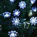 Солнечные Открытый Света Строки 20 LED Цветок Лотоса Фея Светильники для Сада Патио Газон, Забор Путь Пейзаж Рождество