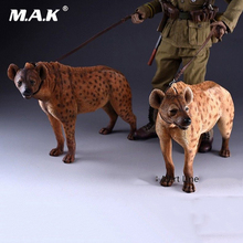 1:6 Scale Alert Line AL100025 Crocuta Crocuta Dog With Leash Animal toy for 12 inches Action Figure Scene accessorie Collections