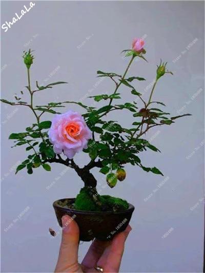Imagenes De Plantas Bonitas Doce Plantas Bonitas De Interior A - Plantas-bonitas-de-interior