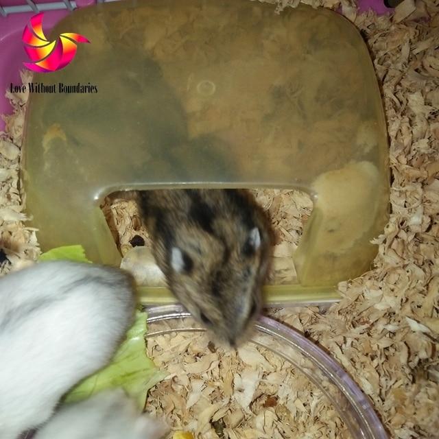 Hamster slaapkamer, slapen kamer, huisdier nest, kingsize bed, bad ...