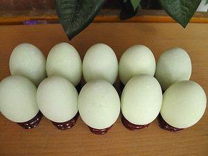 10 светится в темноте камень яйцо шар + подставка 825g