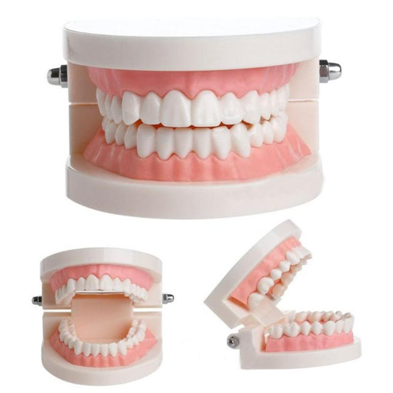 Pro Dental Study Teaching White Teeth Model Caries Tooth Care Oral Education Dentist Equipment Oral Care Tool