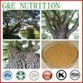 25% natural extrato de casca de salgueiro branco salicin 100g
