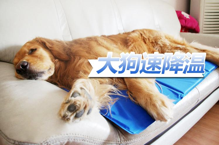 Pets gel ice pad , cooling pad, summer dog cooler cushion , car pet or cat mat for cool