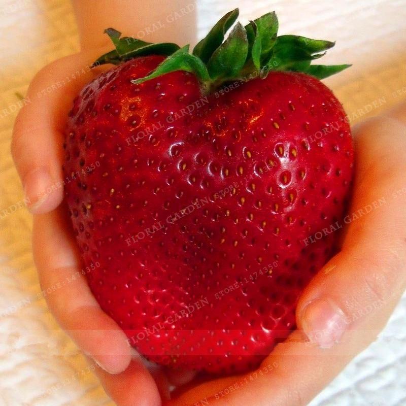 essbare Obst samen 300 stücke Super Riesen Strawberry parfüm bonsai erdbeeren