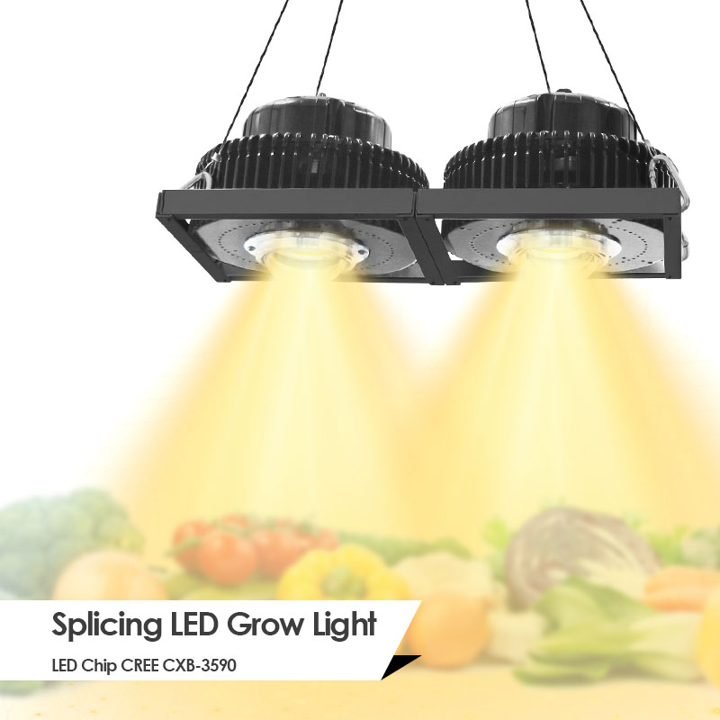 CREE CXB3590 100W 200W 300W 600W 900W COB LED Grow Light Full Spectrum LED Growing Lamp Meanwell Driver For Plant Growth Light