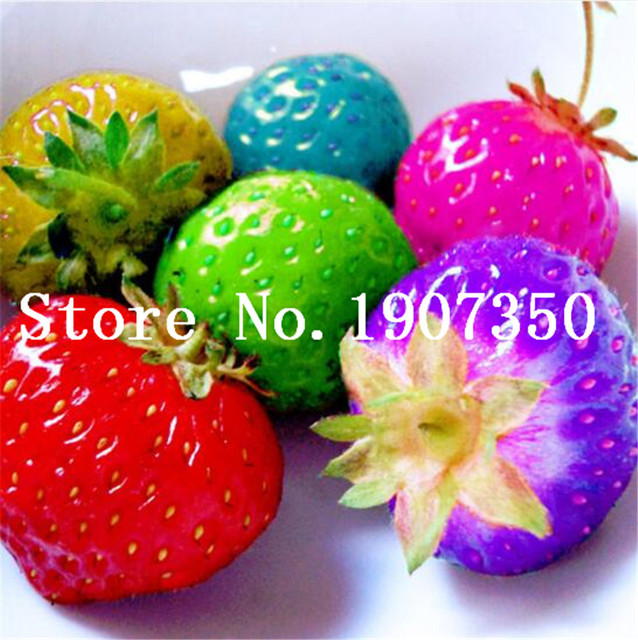 Delicious Multi-color Strawberry Bonsai 200 Pcs Black Blue White Strawberry Fruit Tree Potted Plants Home Garden True Variety