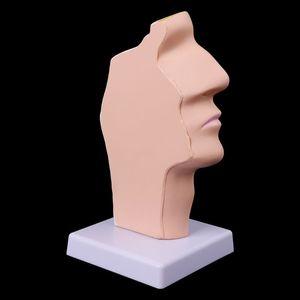 Image 2 - Human Anatomical Nasal Cavity Throat Anatomy Medical Model Teaching Tool