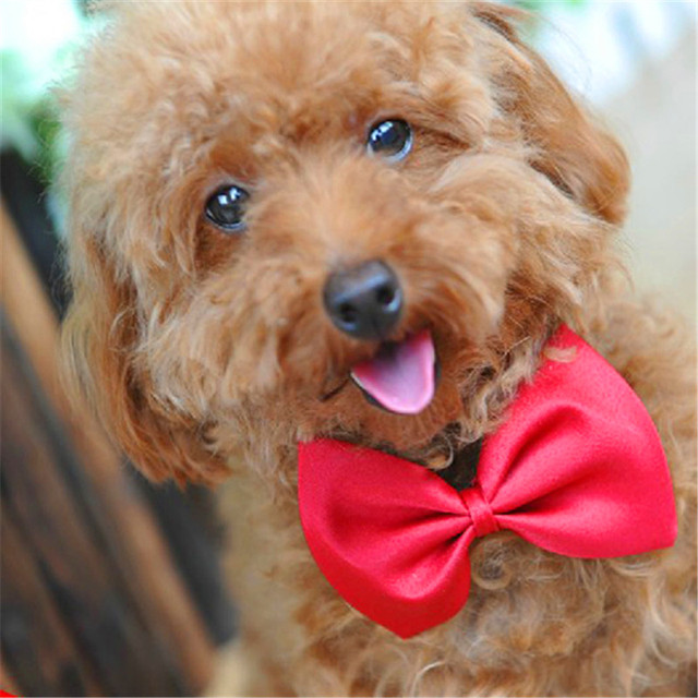 Top Puppies Bow Adorable Dog - 1pc-Lovely-Cute-Dog-Puppy-Cat-Pet-Mini-Bow-Tie-Necktie-Neck-Clothes-for-dogs-Random  Snapshot_166640  .jpg