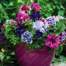 100 pcs/bag double petals petunia seeds bonsai flower seeds Short height garden flowers seeds indoor or ourdoor plant pot