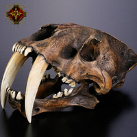 OGRM Смола ремесла 1:1 сабля зубчатые тигр череп модель Анатомия с подставкой ремесла модель кости черепа
