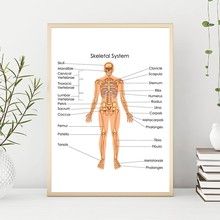 Human Skeletal System Diagram Prints Biology Medical Education Chart Wall Art Poster Doctor Office Decor Canvas Painting Picture(China)