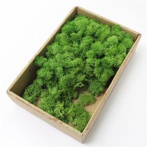 Image 2 - 1000 グラム高品質シミュレーション緑色植物不滅偽花苔草リビングルーム装飾壁 diy の花の装飾
