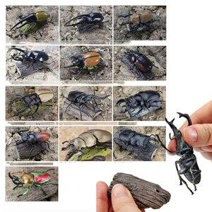 Image 2 - Original 11 ชิ้นแมลงญี่ปุ่นด้วง STAG Beetle กระเป๋าหนอนสัตว์ Figurine เด็กของเล่นสะสม