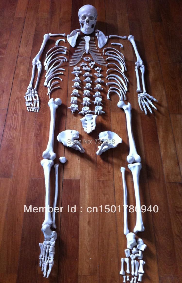 Bulk skeleton model ,The human body 1:1 skeleton model plastic standing human skeleton life size for horror hunted house halloween decoration