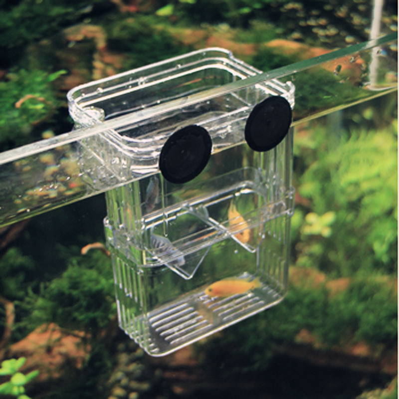 Aquarium Seperation Float Fish Fry breeding Box Isolation Incubator Hang Breeder Divider shrimp ...
