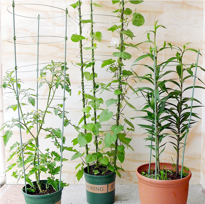 Plant Plant Climbing Support Frame Rings Green Best