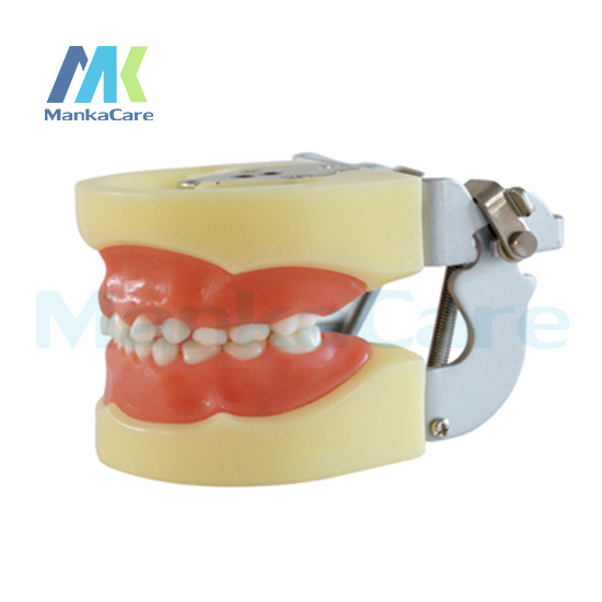 Manka Care - Child Model/24 pcs Tooth/Soft Gum/FE Articulator Oral Model Teeth Tooth Model
