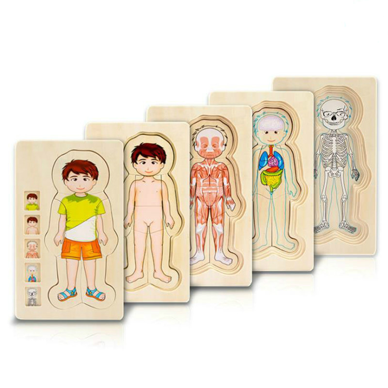 Montessori Wooden Multi-layer Puzzle Human Body Puzzle Boys Girls Body Structure Wood Puzzles Kids Educational Wooden Toys