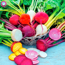 200pcs/bag Rare rainbow beets Seeds Heirloom Organic vegetable color radish Non-GMO Natural Growth Plants bonsai For Home Garden