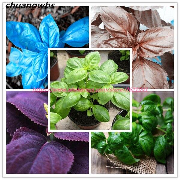 200 pcs/bag basil seeds sweet ocimum bonsai basilicum seeds vegetable fragrant for home garden planting