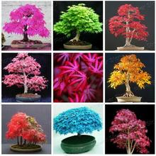 лучшая цена Rare Blue Maple Seeds Bonsai Tree Plants Pot Suit for DIY Home Garden Japanese Maple Seeds 20 Pcs / Kinds Free Shipping