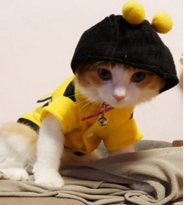 Cat in bumble bee costume