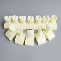 Dentalmall Dental Model #7009 01 Cavity Preparation Model