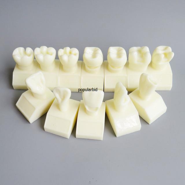 Dentalmall Modelo Dental #7009 01 Modelo de Preparación de La Cavidad