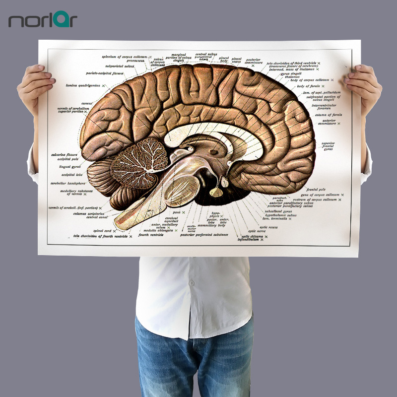Wall Art Picture Canvas Painting Vintage Human Brain Retro Poster Print Body Map Pictures for Surgical Anatomy NO Frame
