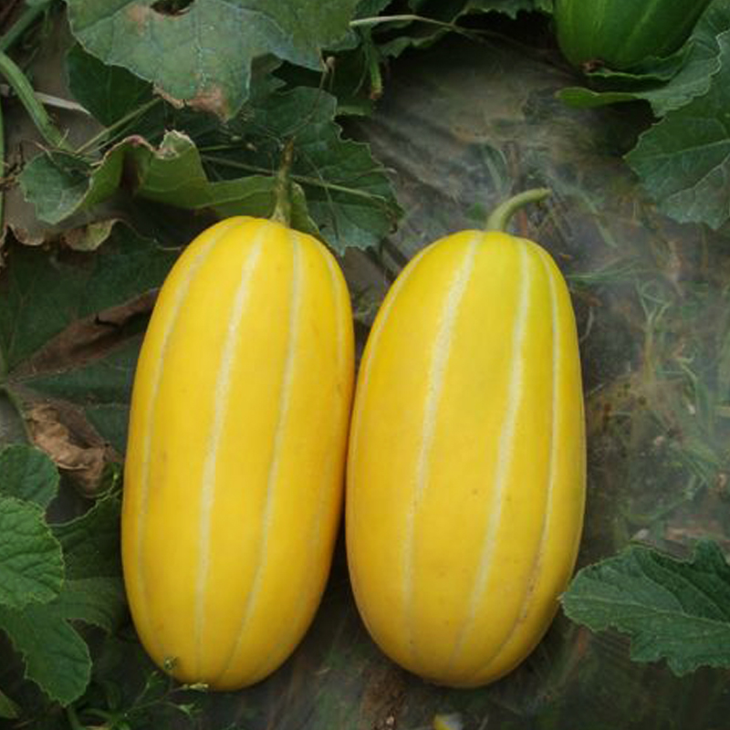 Sale Top Fashion Summer Sementes Potted Fruits And Vegetables Honey Melon Seeds Fruit Ga ...