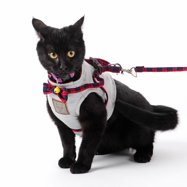 Cat's Harness