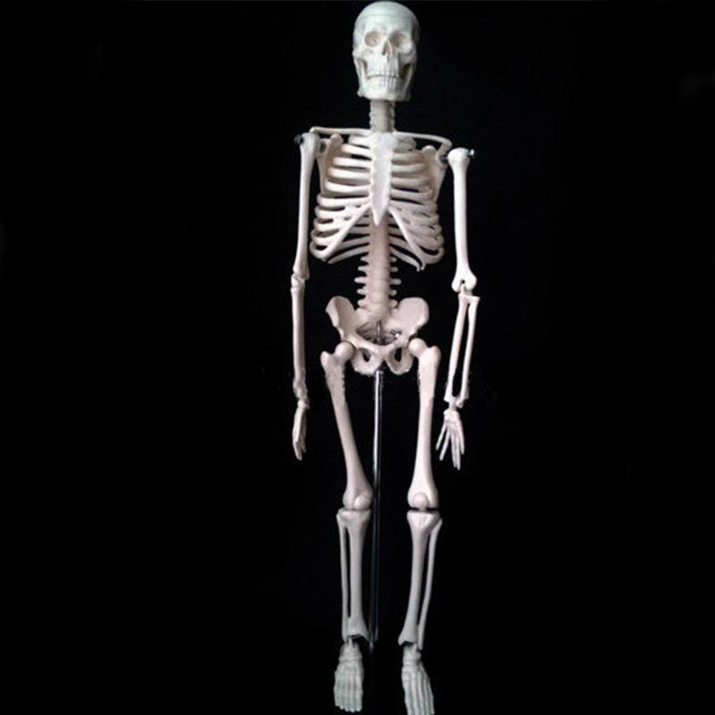 45CM Human Anatomical Anatomy Skeleton Model Fexible Mini - Skeleton model Medical teaching supplies mini human uterus assembly model assembled human anatomy model gift for children