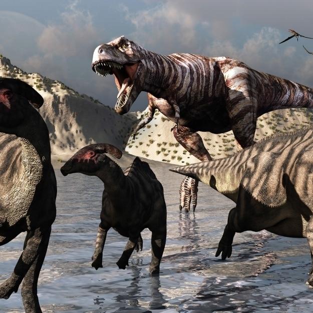 Тираннозавра движется в для убить как Parasaurolophus утконоса попытаться бежать плакат печать (18x11)