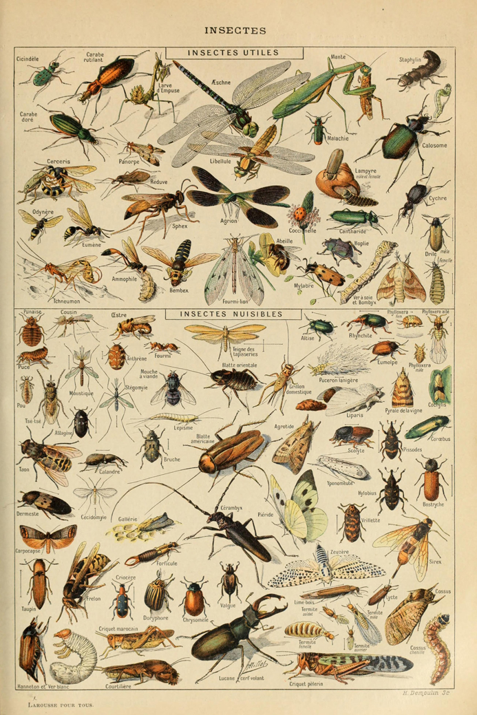 Large Collection Of Insects Decorative Art Cloth Poster 16x24