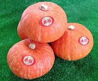 1 Original Packing 100pcs / Pack, Japanese high quality mini pumpkin seeds, Mature 300g Fruit Japan Vegetable Seeds
