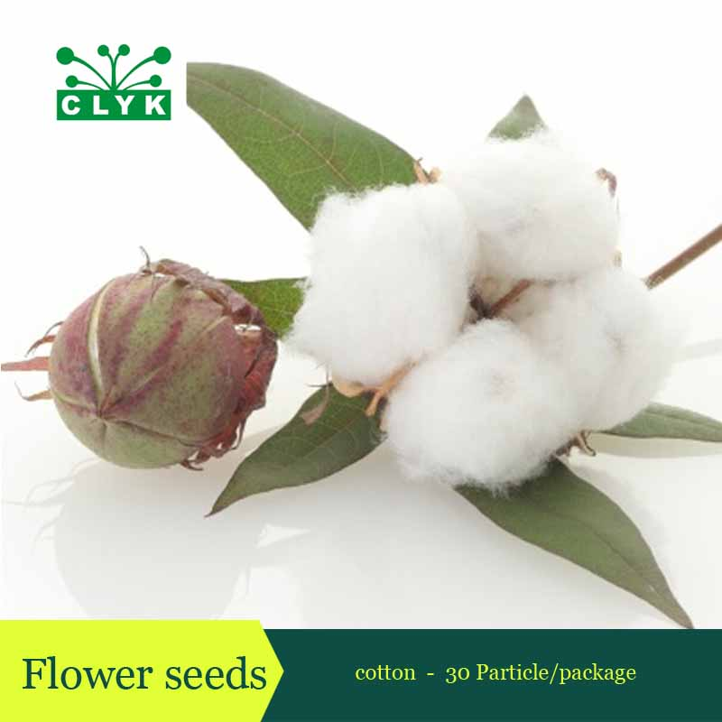 Buy Cotton Seed Crops Cotton Seeds Diy Home Garden Plant 30 Particles Free