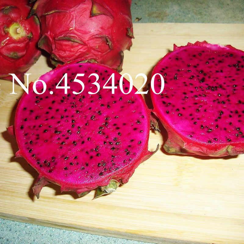 100 Pcs 100% Real Buah Naga Bonsai Putih dan Naga Merah Seedsplants untuk Taman Rumah Non-gmo Pohon Buah bonsai atau Pot Tanaman