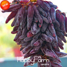 Buy  Growth Grape Sweet Kyoho Gardening,#6T7EXB  online